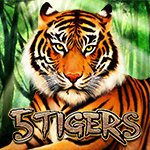 5 Tigers